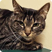 Adopt A Pet :: ADOPTED!!!   Ally - Channahon, IL
