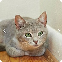 Adopt A Pet :: Essy - Huntsville, AL