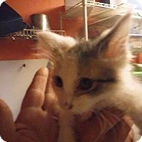 Adopt A Pet :: Bobbie - Batesville, AR