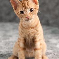 Adopt A Pet :: Magnus - Gainesville, FL