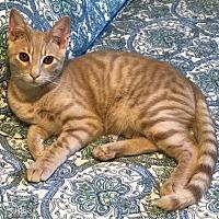 Adopt A Pet :: Skipper & Pipper - West Palm Beach, FL