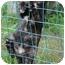 Photo 2 - Domestic Shorthair Kitten for adoption in New Egypt, New Jersey - Striper