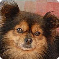 Adopt A Pet :: Truffles - Milan, NY