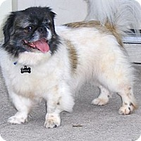Adopt A Pet :: Biscuit - Jacksonville, FL