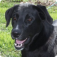 Adopt A Pet :: Buddy - PENDING, in Maine - kennebunkport, ME