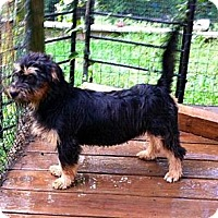 Adopt A Pet :: Amelia - Maysel, WV