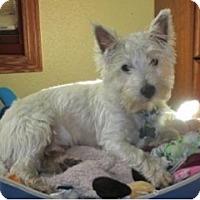 Adopt A Pet :: TUCKER - GARRETT, IN