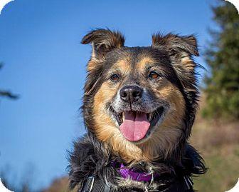 Anatolian Shepherd Mix Dog for adoption in Bellingham, Washington - Puppers
