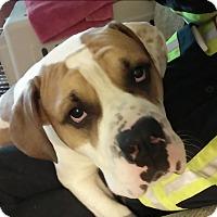 Adopt A Pet :: Tyson - Caledon, ON