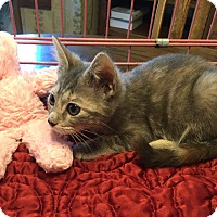 Adopt A Pet :: Maureen - Simpsonville, SC