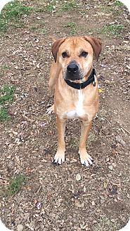 Labrador Retriever Mix Dog for adoption in South Park, Pennsylvania - Zane