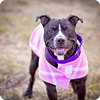 Adopt A Pet :: Ruby - Mansfield, MA