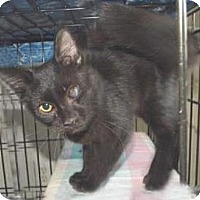 Adopt A Pet :: Ray - Miami, FL