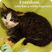 Adopt A Pet :: Freedom - Bentonville, AR