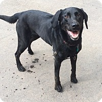 Adopt A Pet :: Fiona in CT - Manchester, CT