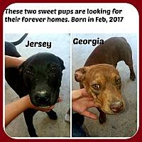 Adopt A Pet :: GEORGIA & JERSEY/ f & m - Malvern, AR