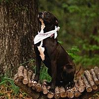Adopt A Pet :: Diamond - Ellaville, GA