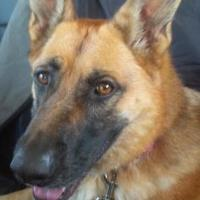 Adopt A Pet :: Chara - Foster Home Urgently Needed - Blackstock, ON