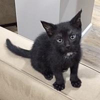Adopt A Pet :: Iris - St. Louis, MO