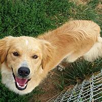 Adopt A Pet :: Bow - Minot, ND