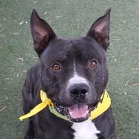 Adopt A Pet :: FATTS - Las Vegas, NV