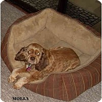 Adopt A Pet :: Molly - Tacoma, WA