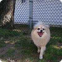 Adopt A Pet :: Nona - Mt Gretna, PA