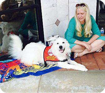 Great Pyrenees Mix Dog for adoption in Kyle, Texas - Laila