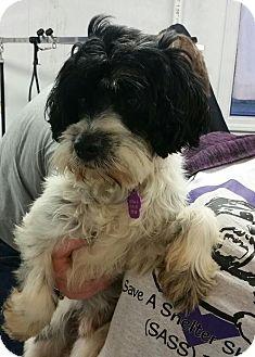 Terrier (Unknown Type, Medium) Mix Dog for adoption in Urbana, Ohio - Pinto