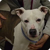 Adopt A Pet :: Kensie - Channahon, IL