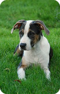 Beagle/Hound (Unknown Type) Mix Puppy for adoption in CUMMING, Georgia - Talia