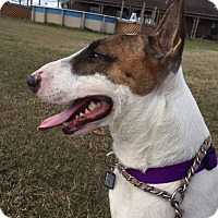 Adopt A Pet :: Brock - Houston, TX