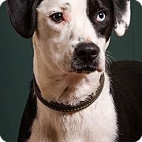 Adopt A Pet :: Sherman - Owensboro, KY