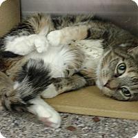 Adopt A Pet :: Bonnie - Colmar, PA