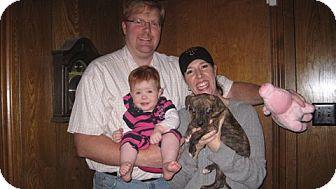 Boxer Mix Puppy for adoption in Houston, Texas - JACKSON