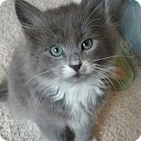 Adopt A Pet :: Elmer - North Highlands, CA