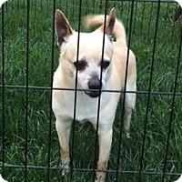 Adopt A Pet :: Kingston - Beavercreek, OH