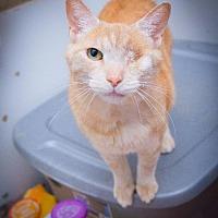 Adopt A Pet :: Corky - Corinne, UT
