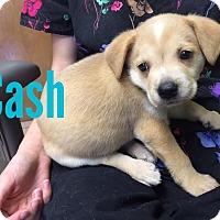 Adopt A Pet :: Cash - Joplin, MO