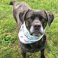 Adopt A Pet :: Eva - Baltimore, MD