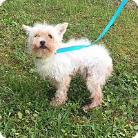 Adopt A Pet :: Little Ceasar - Foster, RI