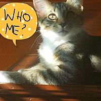 Adopt A Pet :: Ryder - Wilmore, KY