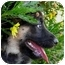 Photo 2 - German Shepherd Dog Puppy for adoption in Los Angeles, California - Caitlyn von Lancaster
