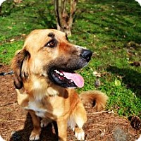 Adopt A Pet :: Apple - Hagerstown, MD