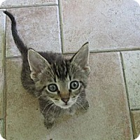 Adopt A Pet :: Lamar - Acme, PA
