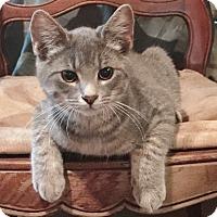 Adopt A Pet :: Sweetpea - Byron Center, MI