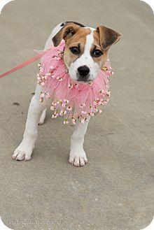 Beagle Mix Dog for adoption in Muldrow, Oklahoma - Bridgette