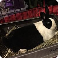 Adopt A Pet :: Alex - Portland, ME