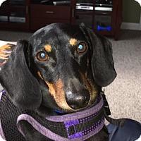 Adopt A Pet :: Toby - Jacobus, PA