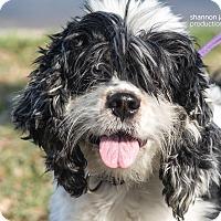 Adopt A Pet :: Joy - Gainesville, FL